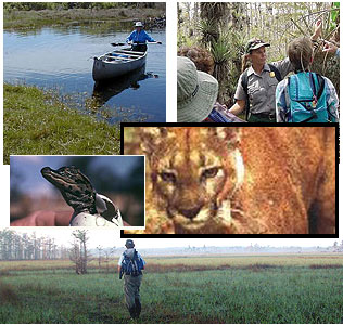 Big Cypress Wildlife Preserve South Florida Miami Hollywood Palm Beach Naples Ft Myers Discounts